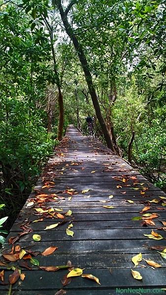 เส้นทางสะพานไม้ศึกษาป่าชายเลน